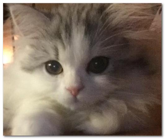 ユン・ギュンサンの飼い猫